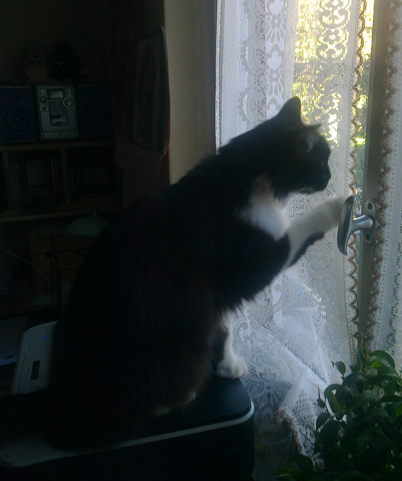 L 39 attesa for Finestra gatto